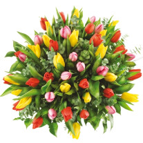 50 colourful tulips